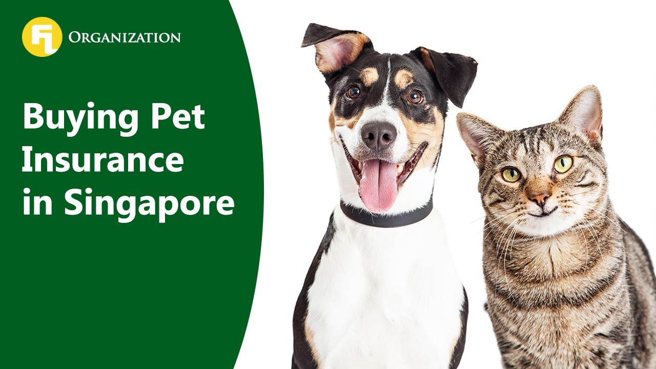 Buying Pet Insurance in Singapore – FLA Organization